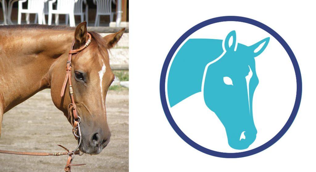 Veterinary Illustration Horse
