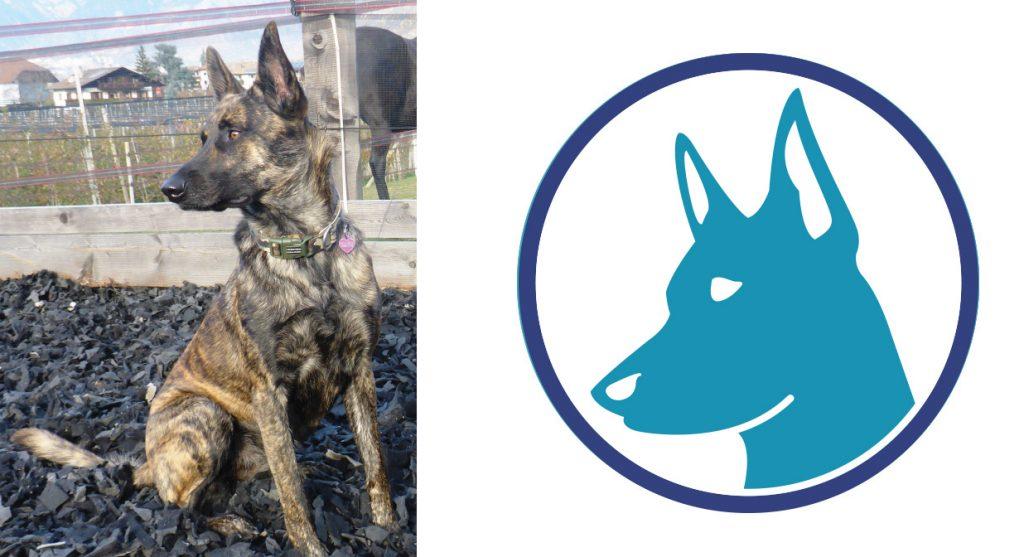 Veterinary Illustration Dog